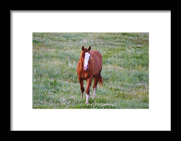 Horse Framed Print featuring the photograph Here She Comes by Jeff Swan