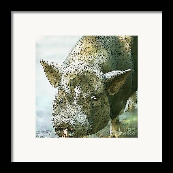 Pig Framed Print featuring the photograph Here's Woody by Artist and Photographer Laura Wrede