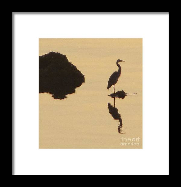 Heron Framed Print featuring the photograph Heron In Silhouette by David Call