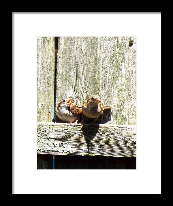 Birds Chicks Bird Fence Framed Print featuring the photograph Hey Chickie by Lisa Roy