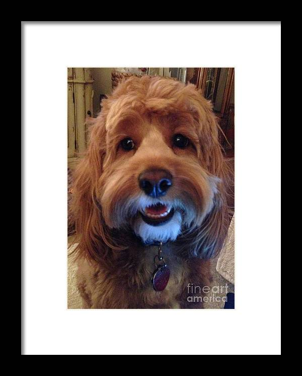 Charley Framed Print featuring the photograph Hey I'm Charley by Christy Gendalia