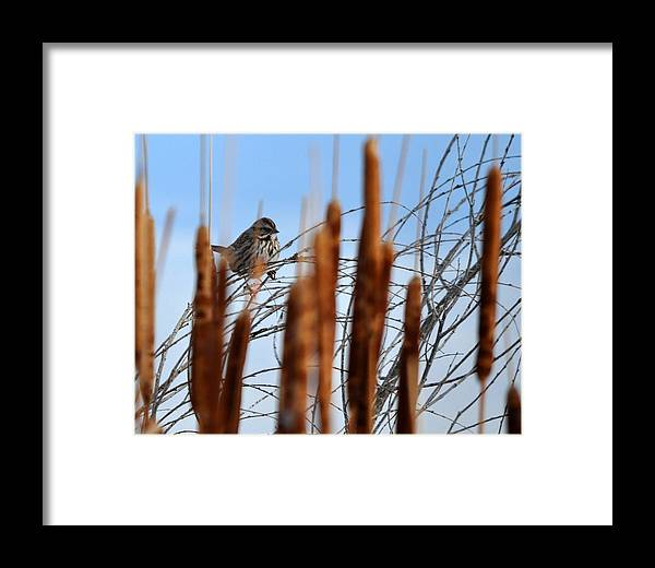 Framed Print featuring the photograph Hey There by Lisa Walls