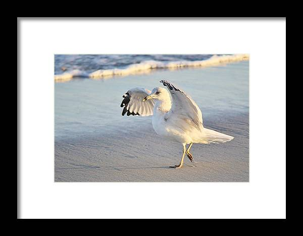 Sea Gull Framed Print featuring the photograph Hey Wait - Sea Gull by Paulette Thomas