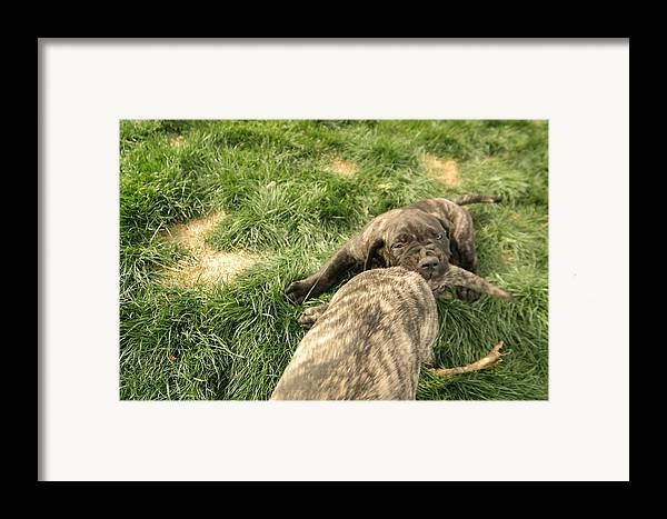 Dogs Framed Print featuring the photograph Hey You Come Back Here Buddy by Jeff Swan