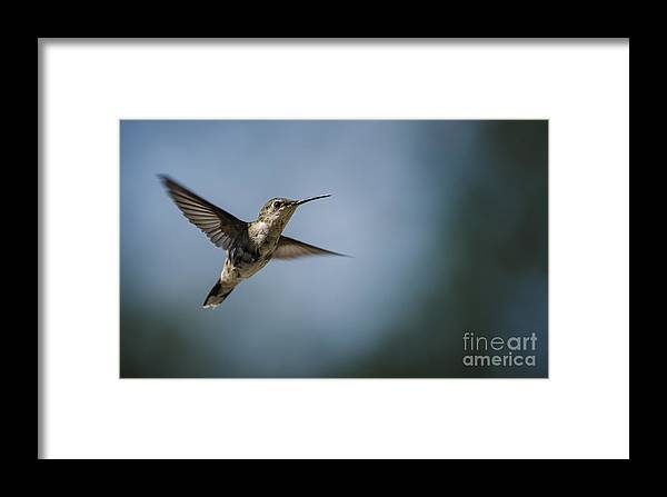 Bird Framed Print featuring the photograph HH1 by N R
