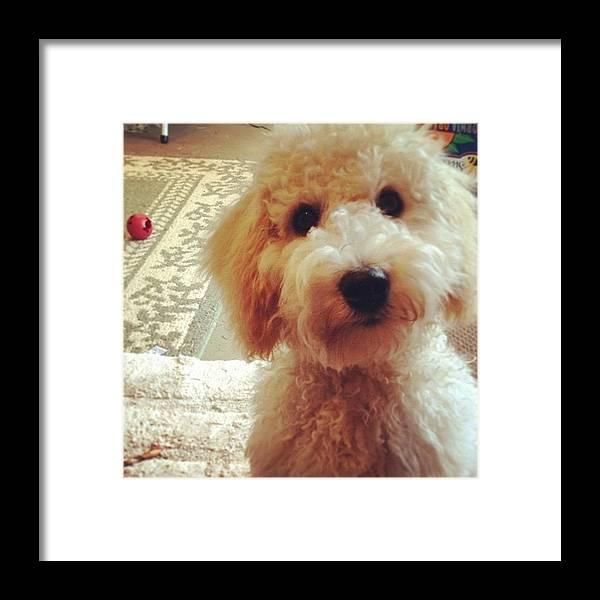 Love Framed Print featuring the photograph Doodledog Georgie by Blenda Studio