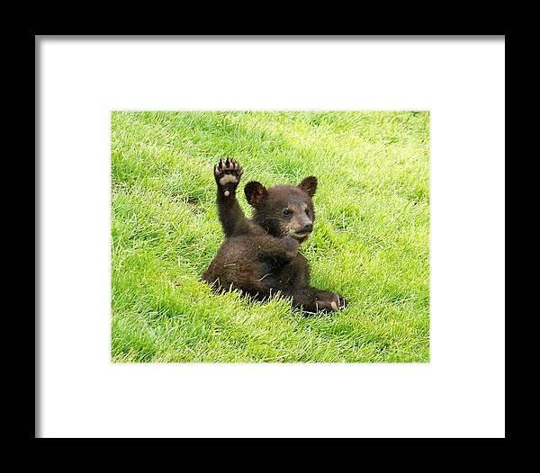 West Bear Framed Print featuring the photograph Hi Five Bear by Brad Mayer