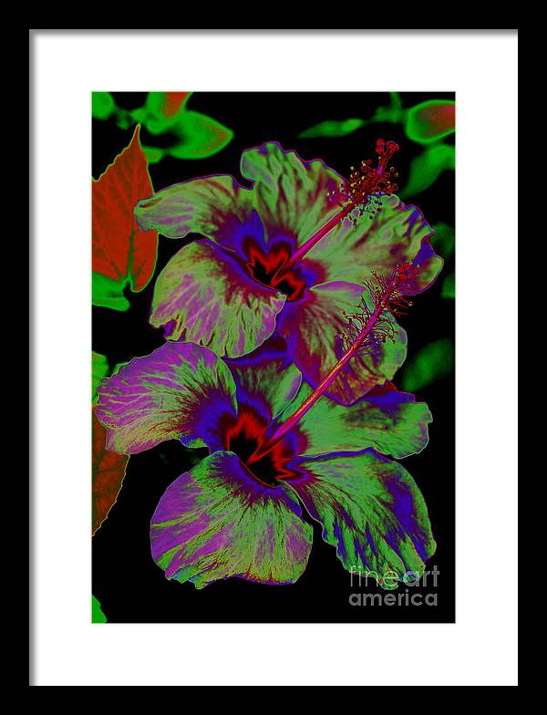 Hibiscus Framed Print featuring the photograph Hibiscus by Brent Boutin