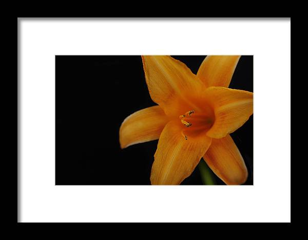 Hibiscus Flower Framed Print featuring the photograph Hibiscus by Dan Peak