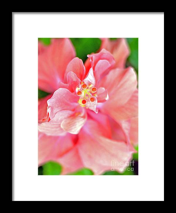 Flower Framed Print featuring the photograph Hibiscus II by Paola Correa de Albury