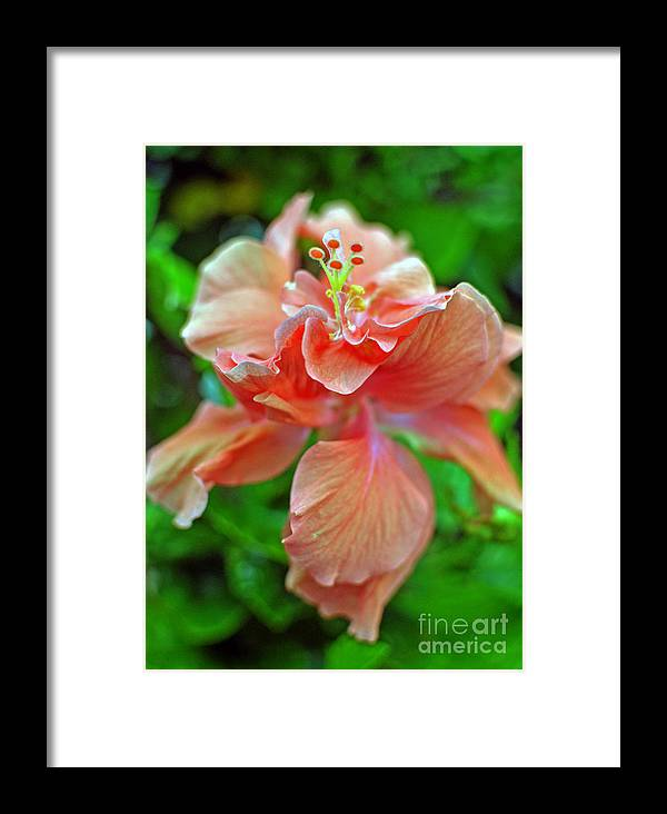 Flower Framed Print featuring the photograph Hibiscus IIi by Paola Correa de Albury