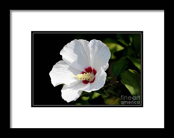 Flowers Framed Print featuring the photograph Hibiscus by Irina Hays