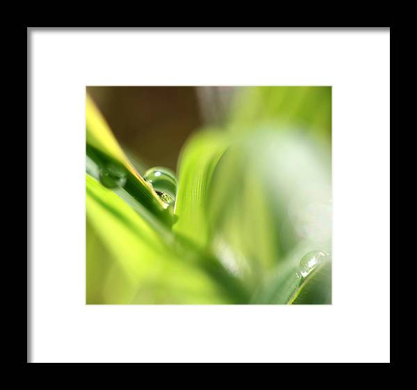 Leaves Framed Print featuring the photograph Hiding In The Corner by Carolyn Fletcher
