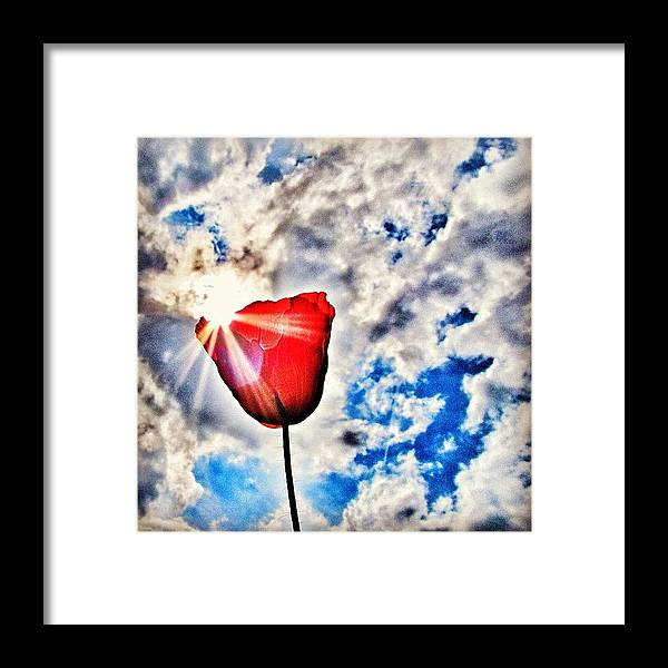 Nature Framed Print featuring the photograph High As A Sky by Marianna Mills