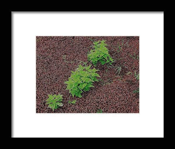 Plants Framed Print featuring the photograph High Contrast Plantlife by Ben Freeman