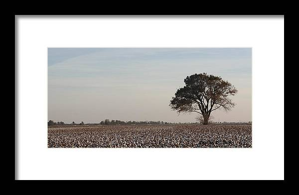 Cotton Framed Print featuring the photograph High Cotton 2 by Lanette Baker
