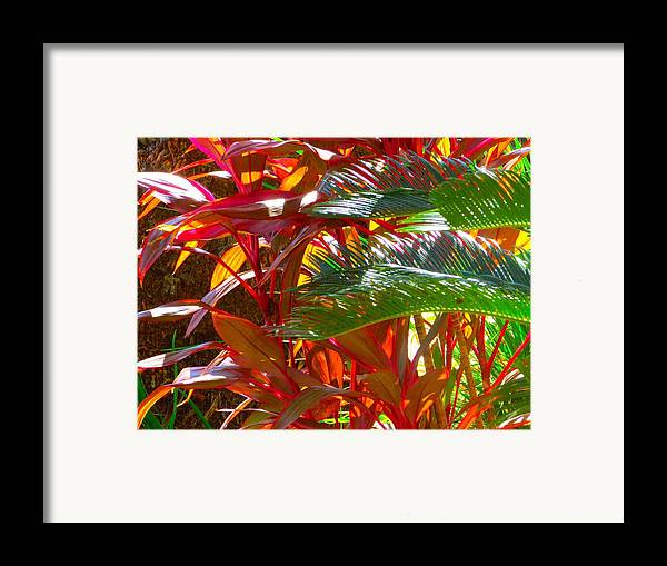 Landscape Plants Framed Print featuring the photograph Highlights by Gayle Price Thomas