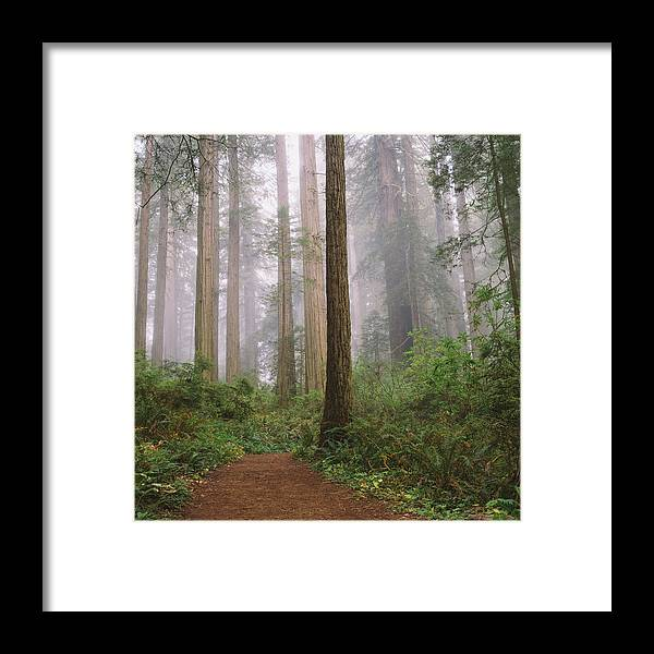 Tranquility Framed Print featuring the photograph Hiking Through Californias Redwoods by David Hoefler