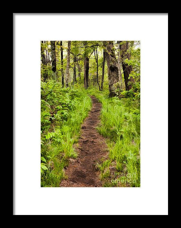 Blue Ridge Parkway Framed Print featuring the painting Hiking Through The Blue Ridge II by Dan Carmichael