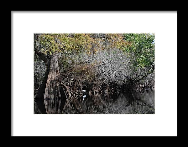 Hillsborough River Framed Print featuring the photograph Hillsborough Egret 01 by Carol Kay
