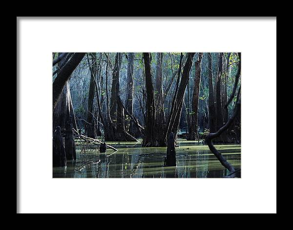 Swamp Framed Print featuring the photograph Hillsborough Swamp Autumn 32 by Carol Kay