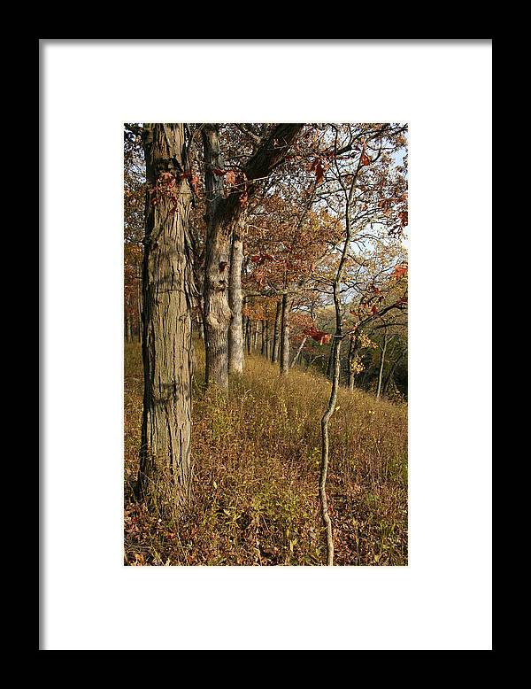 Landscape Framed Print featuring the photograph Hillside Autumn by Dylan Punke