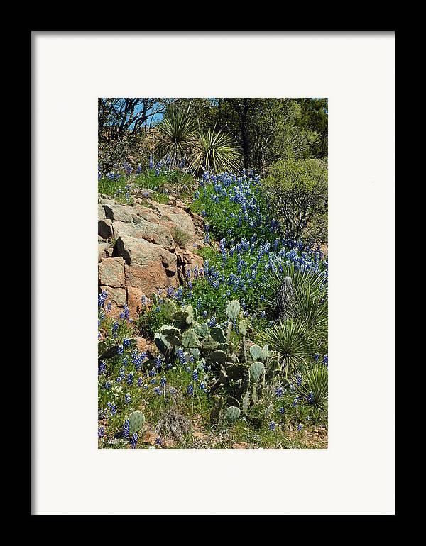 Bluebonnets Framed Print featuring the photograph Hillside Blue by Robert Anschutz