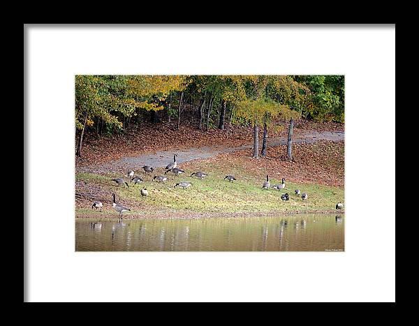 Hillside Of Canadian Geese Framed Print featuring the photograph Hillside Of Canadian Geese by Maria Urso