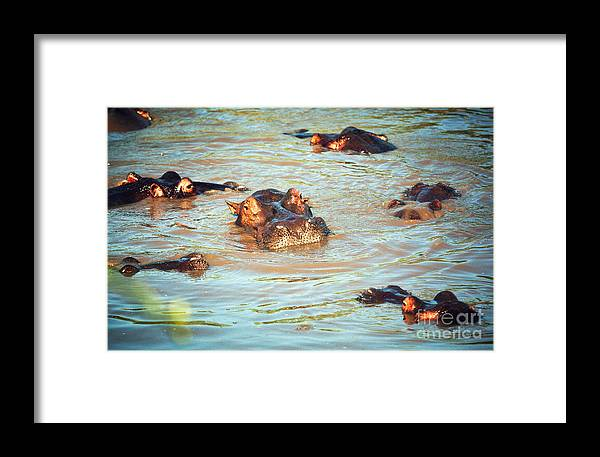 Hippo Framed Print featuring the photograph Hippopotamus Group In River. Serengeti. Tanzania by Michal Bednarek