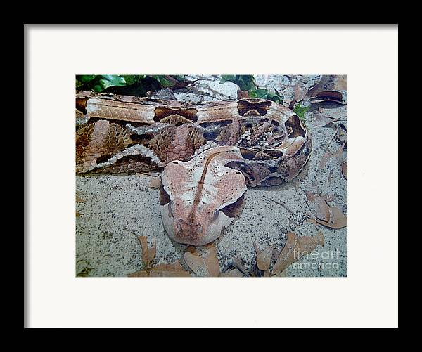 Snakes Framed Print featuring the photograph Hissssss by Heather Morris