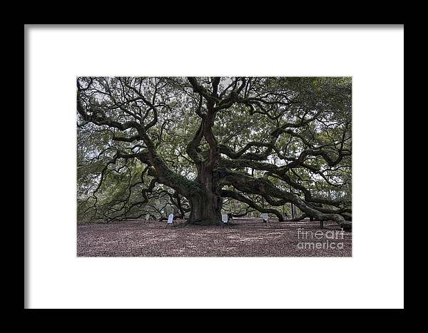Angel Oak Tree Framed Print featuring the photograph Historic Angel Oak by Dale Powell