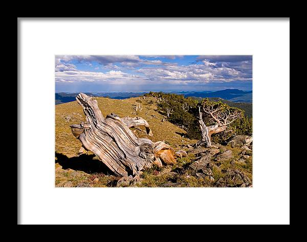 Bristlecone Pine Photograph Framed Print featuring the photograph Hoe-down At The Top Of The World by Jim Garrison