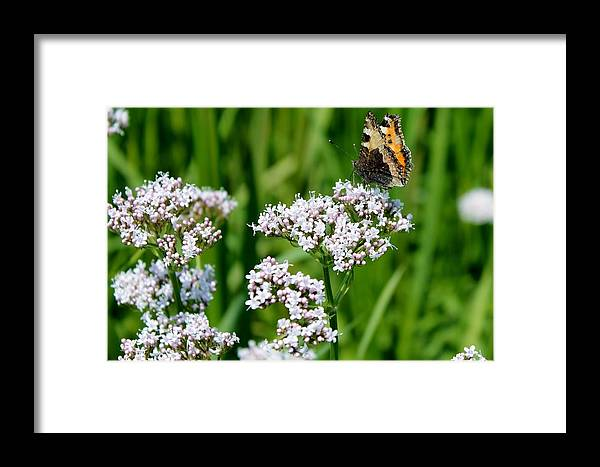 Hogweed Framed Print featuring the photograph Hogweed by Jason Means
