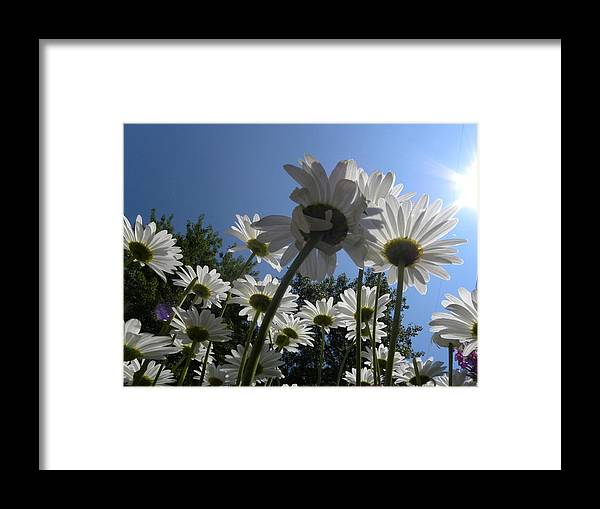 Daisy Framed Print featuring the photograph Holding Hands by Julie Fields