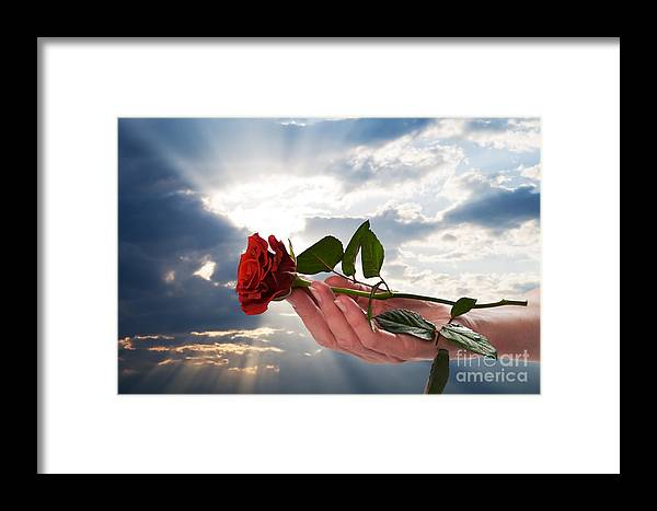 Holding Red Rose In Romantic Scenery Framed Print by Michal Bednarek