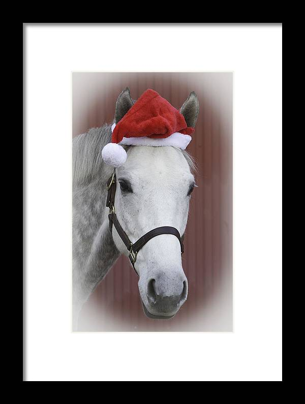 Horse Framed Print featuring the photograph holiday horse Friendly by Mary Jo Taft