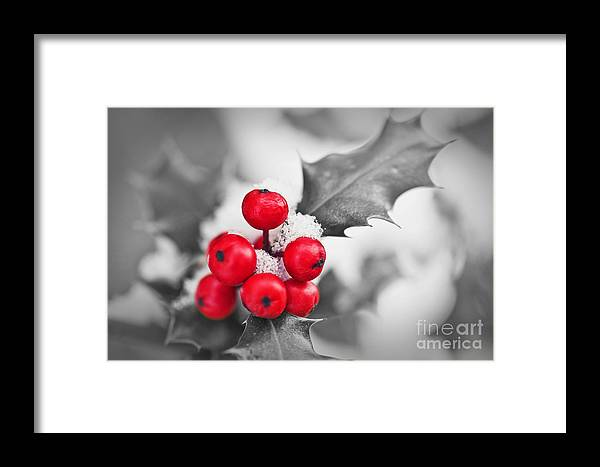 Christmas Framed Print featuring the photograph Holly by Delphimages Photo Creations