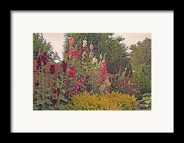 Hollyhocks Framed Print featuring the photograph Hollyhocks by Kay Novy