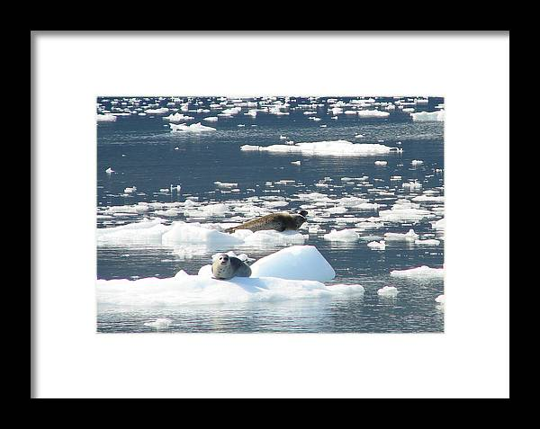 Iceberg Framed Print featuring the photograph Home Home On The Ice by Lew Davis