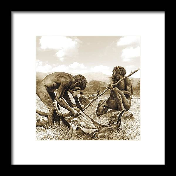 Homo Habilis Hunting, Artwork Framed Print by Science Photo Library
