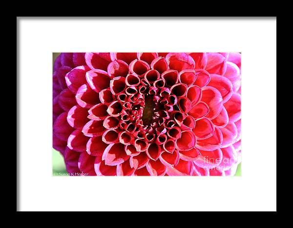 Flower Framed Print featuring the photograph Honeycomb Dahlia by Susan Herber