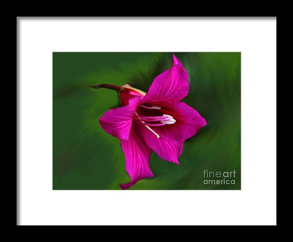Bauhinia Blakeana Framed Print featuring the photograph Hong Kong Orchid by Elizabeth Winter