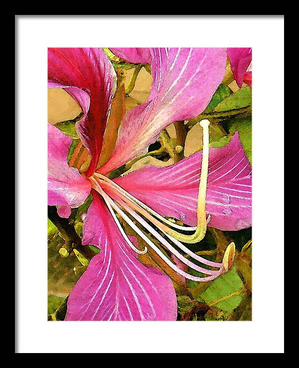 James Temple Framed Print featuring the photograph Hong Kong Orchid Tree by James Temple