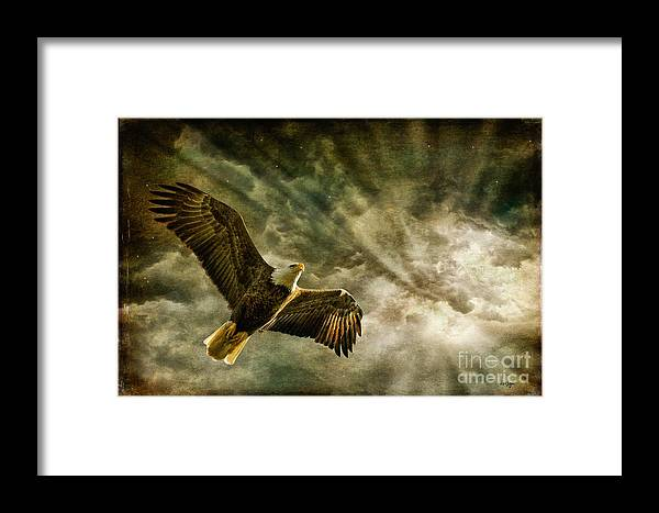 Eagle Framed Print featuring the photograph Honor Bound In Blue by Lois Bryan