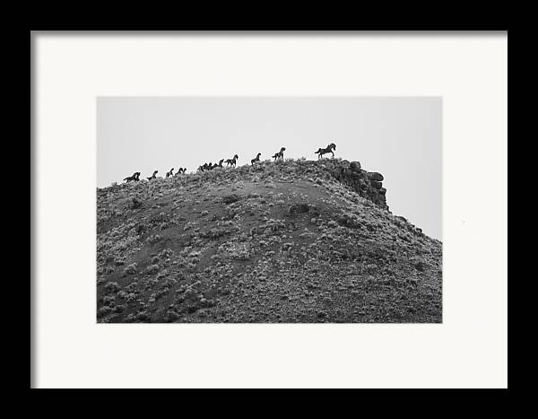 Montana Framed Print featuring the photograph Horizon Horse by Paul Bartoszek
