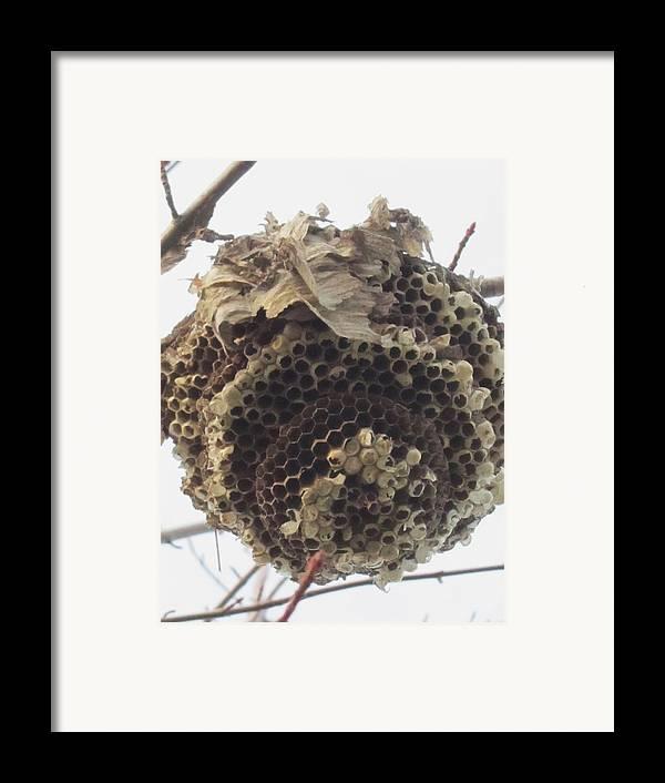Hornet's Nest Framed Print featuring the photograph Hornet's Nest by Todd Sherlock