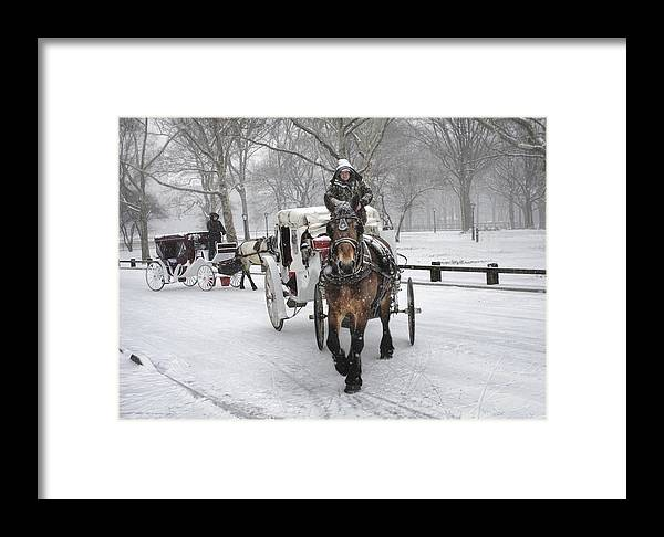 Carriage Framed Print featuring the photograph Horse Carriages In Snowy Park by Dave Beckerman