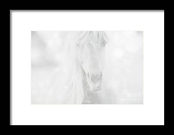 Horse Framed Print featuring the photograph Horse Dream by Christina Williams