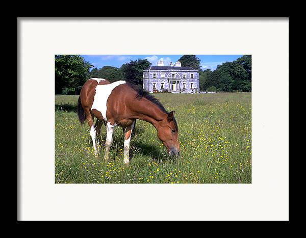 Horse Framed Print featuring the photograph Horse Grazes Near St. Clerans by Carl Purcell