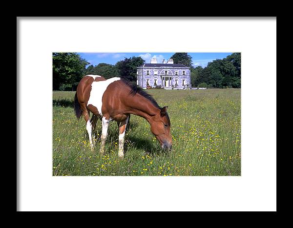 Horse Framed Print featuring the photograph Horse Grazes Near St. Clarens by Carl Purcell